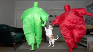 まったりしていた愛犬もびっくり。'Chub'スーツを着ておもしろダンス!