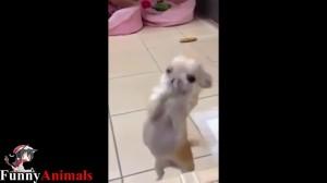 【笑える】なんこれ超可愛い♡犬達のダンスしているような動きがめっちゃシュール!