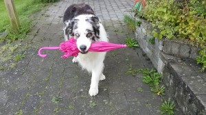 【Twitterで話題】上手にスキップする犬!?「Dog Umbrella Dance」が可愛すぎる♡